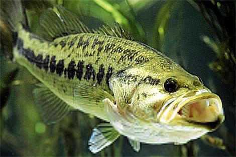 Una de las especies amenazadas por la contaminación. | Age Fotostock