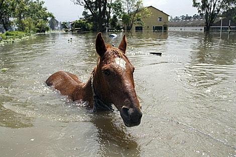 Un caballo afectado por las inundaciones en Mosquera, Colombia. | Reuters