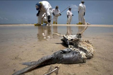Trabajadores en tareas de limpieza en las costa de Misisipi en julio de 2010. | Reuters