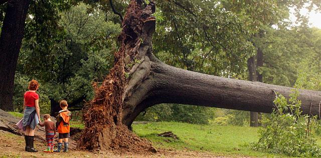 Una familia, ante un árbol caído en Central Park. | AFP/Getty MÁS FOTOS