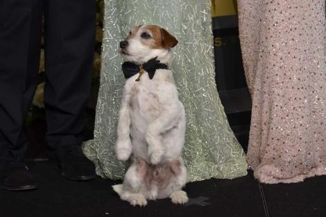 Uggie, durante su aparición en la gala de los Oscar. | Afp