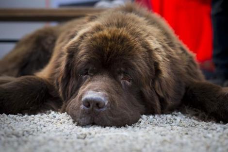Un perro descansando.| Afp