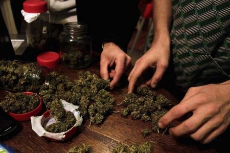 Cultivo de marihuana.| Reuters