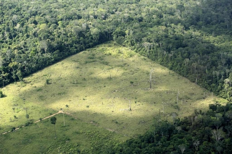 Parcela de cultivo de soja en Brasil. | José F. Ferrer