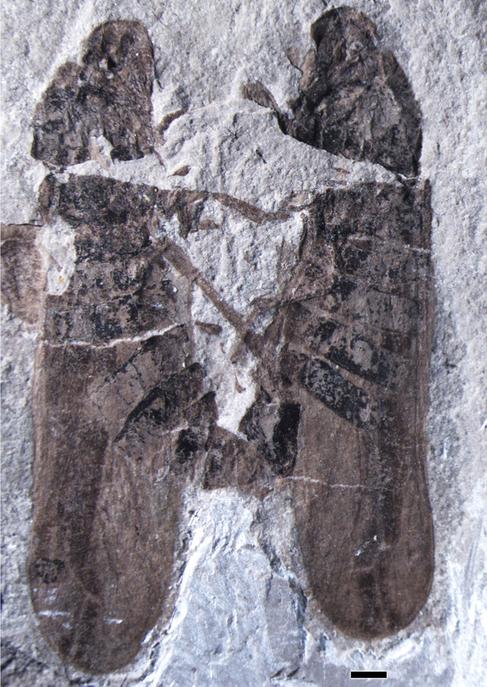 El fósil de los insectos copulando descubierto en China.
