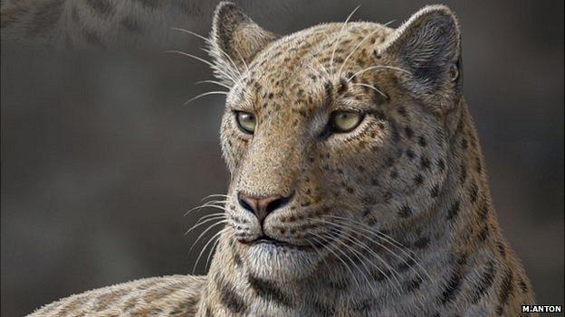 La 'Panthera blytheae' era similar a los leopardos de las...