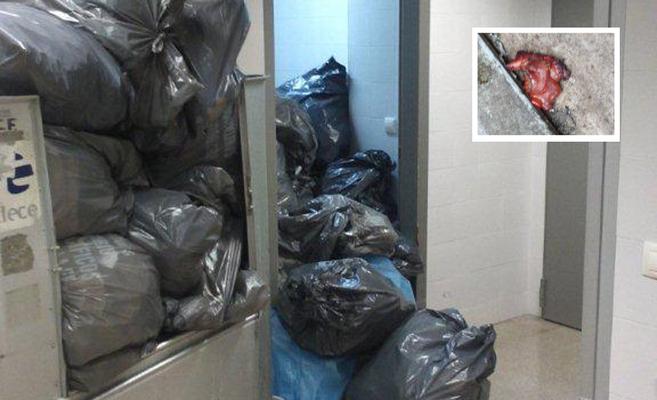 Las bolsas de basura con residuos orgánicos se amontonan varios días...