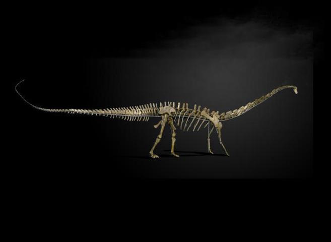 Dinosaurio de la especie 'Diplodocus longus'