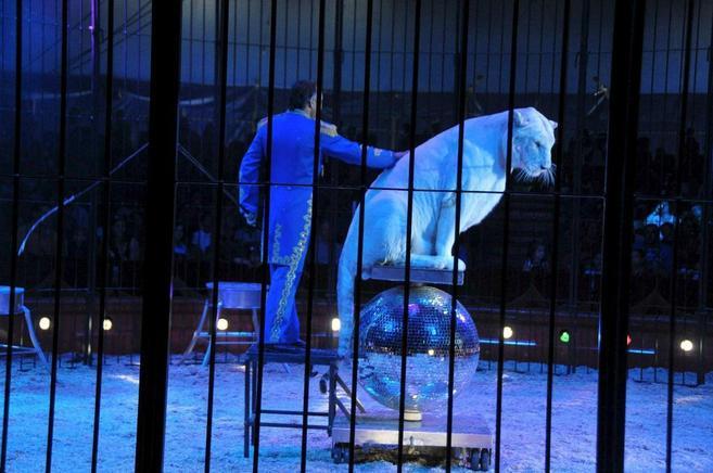 Función del Gran Circo Mundial con animales