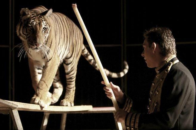 El domador herido junto a la tigresa.