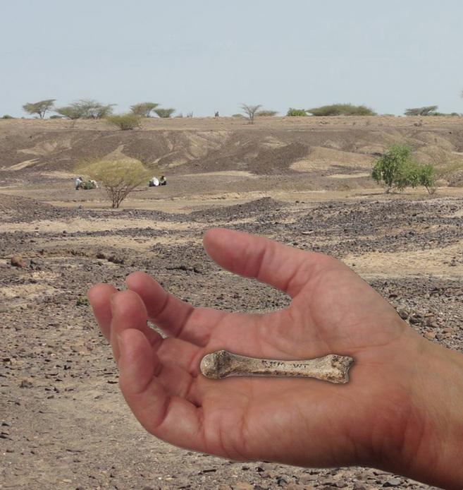 Metacarpo hallado en Kenia sobrepuesto en una mano humana.