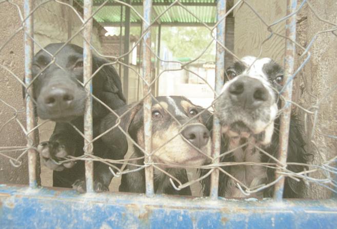 Mascotas acogidas en las instalaciones del Centro Canino...