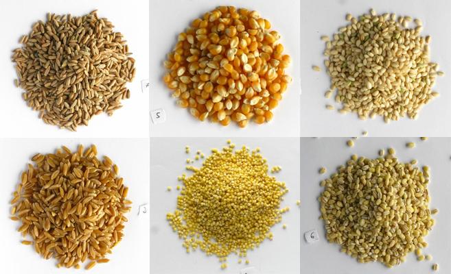 Ariba: granos de centeno, maíz y arroz. Abajo: trigo, mijo y cebada.