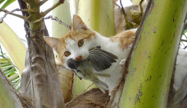 Un gato asilvestrado con un ave en la boca.