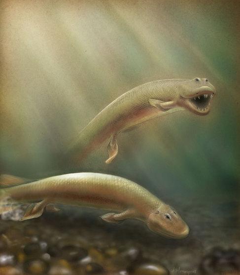 El híbrido entre pez y cocodrilo que 'caminaba' por el fondo del mar