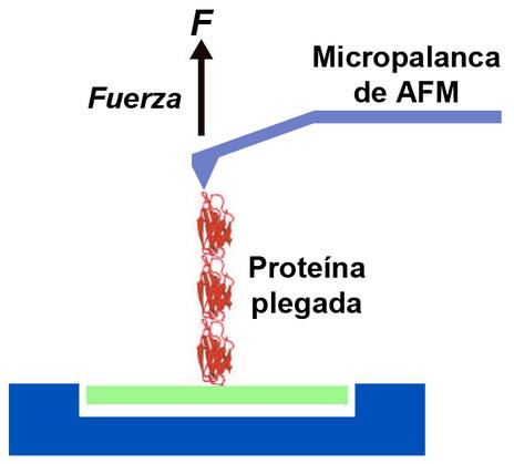 La Manipulación De Moléculas Biológicas Una A Una Ciencia