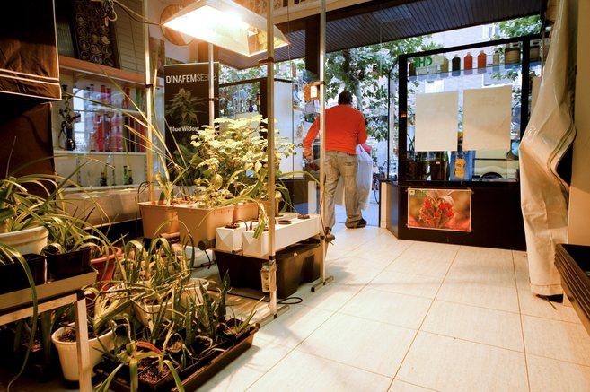 Establecimiento de venta de productos para el cultivo de cáñamo.