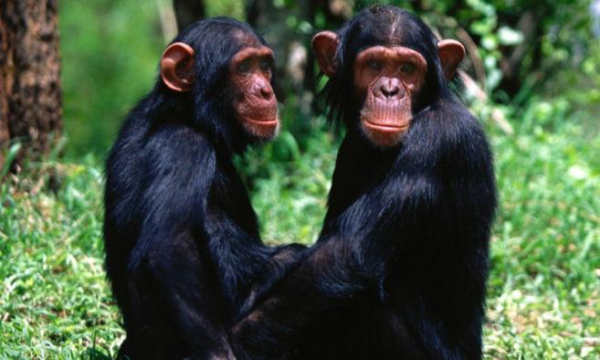 Sólo el 3% de los mamíferos es monógamo. Y no del todo.