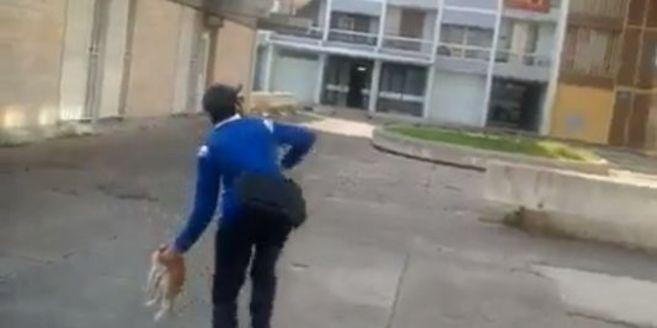 El joven detenido en uno de los vídeos en los que lanza un gato...