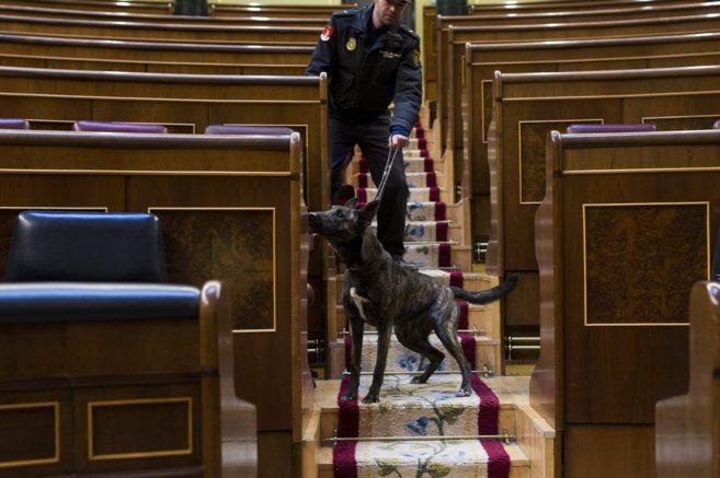 Un perro policía examina el Hemiciclo antes del debate