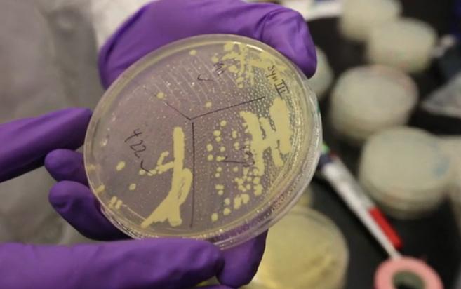 La primera levadura con un cromosoma sintético.