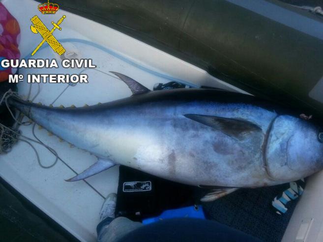El pescado decomisado en Lanzarote.