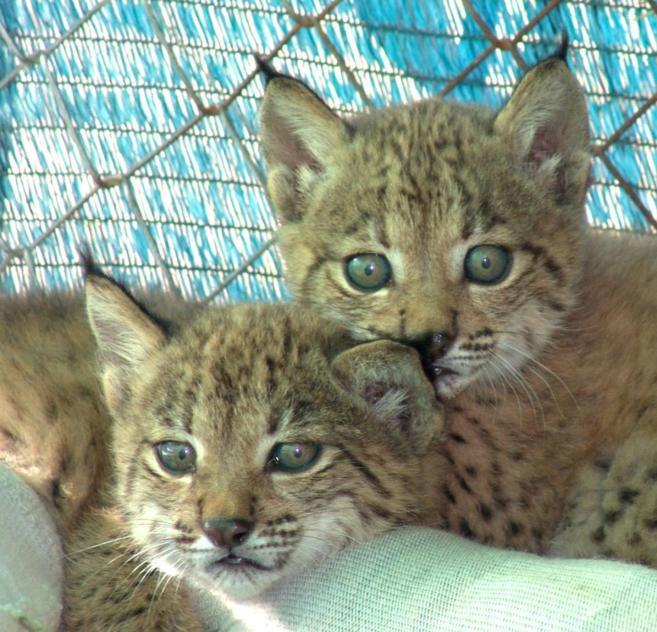Brisa, madre de las crías, días después de su nacimiento en 2005.
