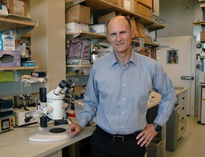 Juan Carlos Izpisúa, en su laboratorio del Instituto Salk, en La...
