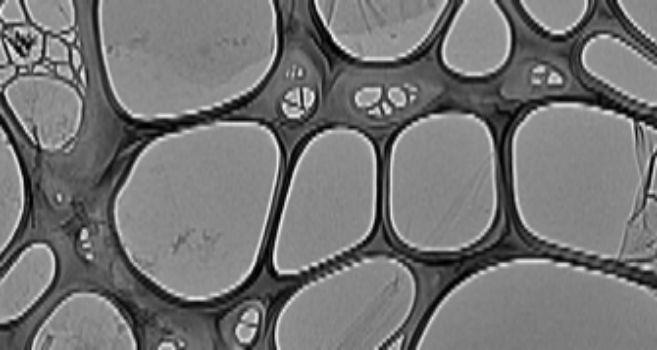 Grafeno visto desde el microscopio.