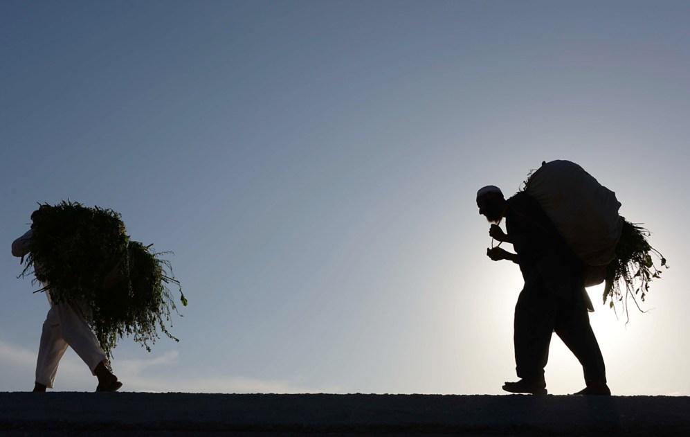 Hombres afganos llevan la leña sobre sus hombros a las afueras de...
