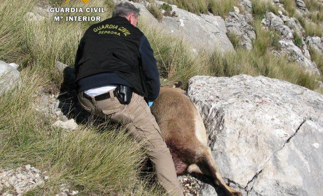 Un agente de la Guardia Civil con un ejemplar de cabra montés.