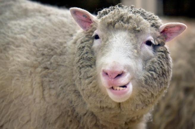 La oveja Dolly con artristis