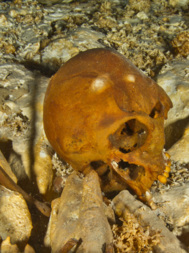 Cráneo humano hallado en el cenote de Hoyo Negro.