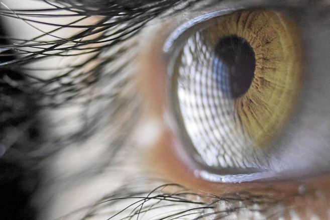 Detalle de un ojo verde