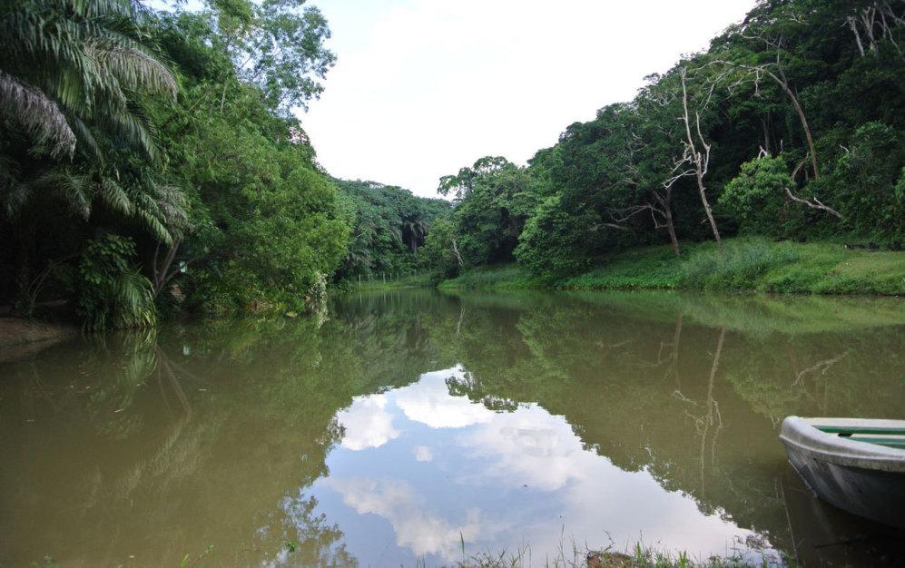 Vista desde una embarcación del río Congo y de la jungla que lo...