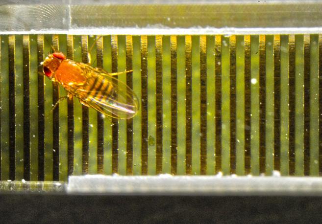 Las moscas piensan antes de actuar