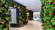 Las plantas que cubren las paredes del mercado.