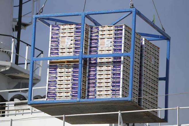 Un cargamento de naranjas en el Puerto de Castellón rumbo a Estados...