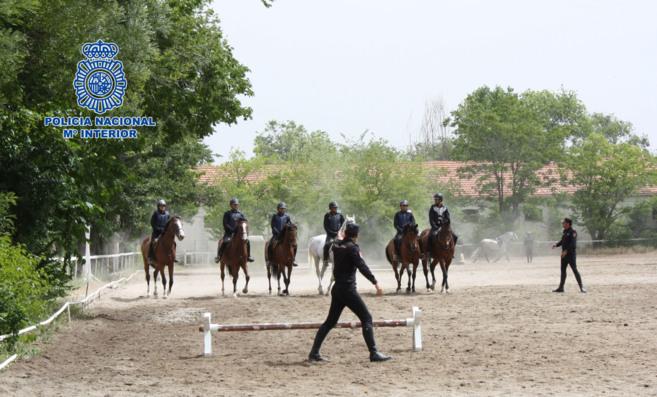 Jornada de entrenamiento para los caballos de la Policía Nacional.