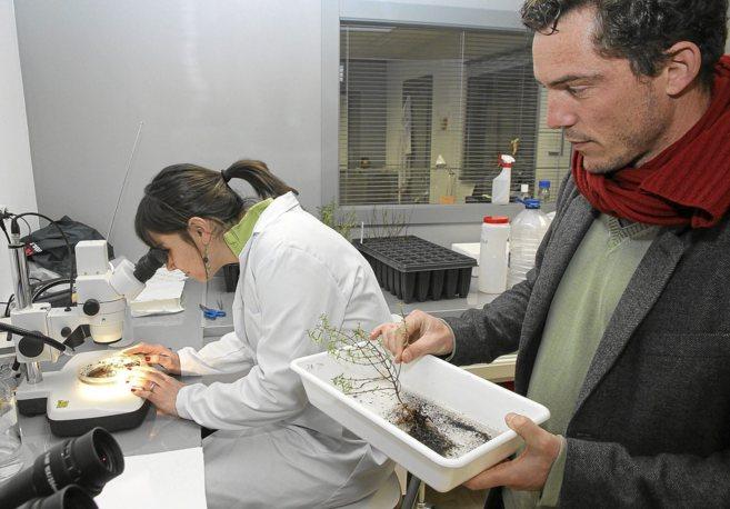 Olaya Mediavilla y Jaime Olaizola, de IDForest, en su laboratorio.