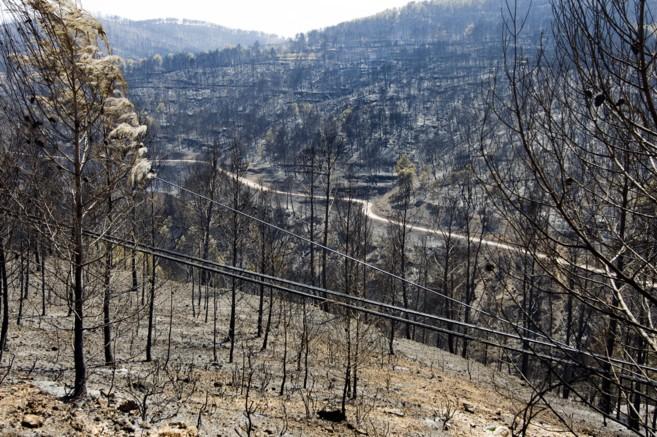 Parte de la zona quemada por el incendio de Andilla en 2012.