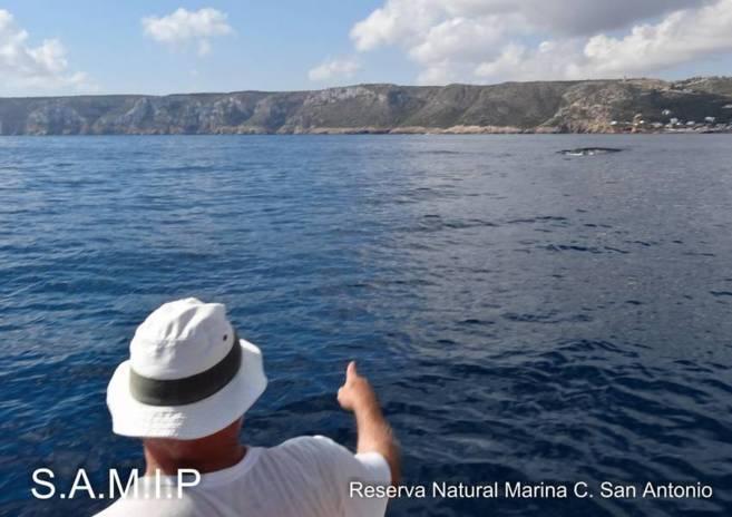 Uno de los voluntarios señala la presencia de una ballena cerca de la...