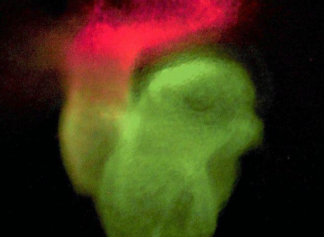 El corazón de un embrión de ratón, regenerado con células madre...