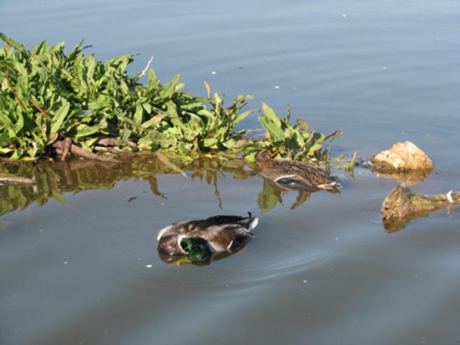 Aves muertas en un humedal de Castilla-La Mancha