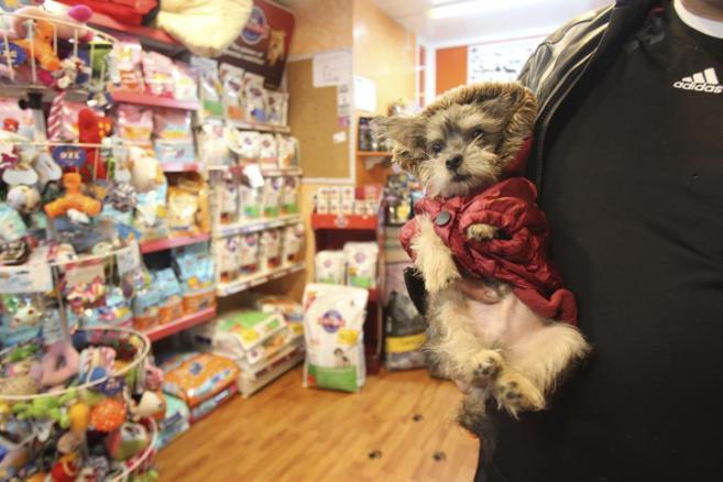Un perro en una tienda especializada de mascotas