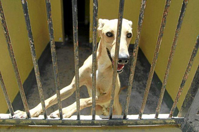 Un perro apoyado en las vallas de una de las jaulas individuales de la...