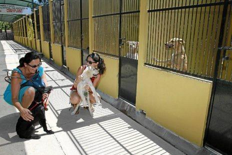Voluntarios paseando a los perros de Son Reus.