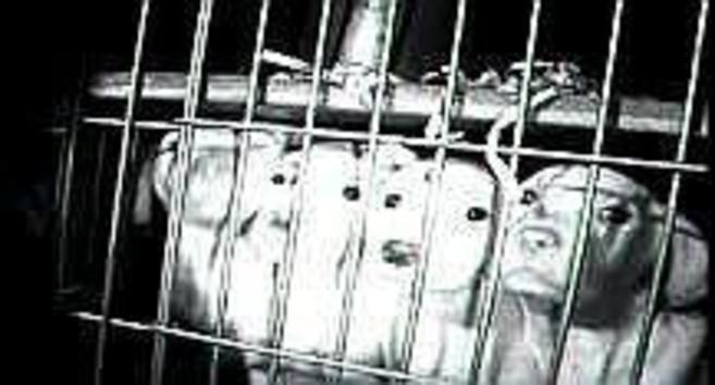 Cuatro cachorros asoman la cabeza entre las rejas de una jaula en...