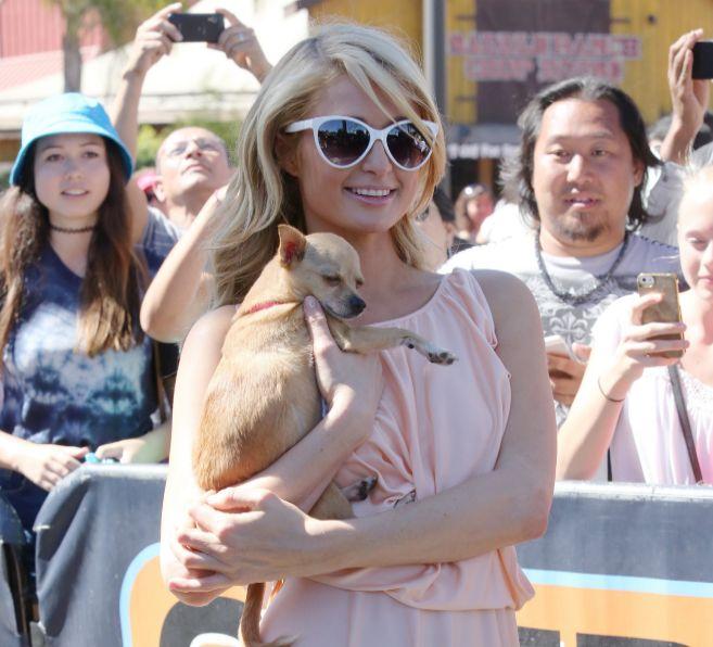Paris Hiltom y su chihuahua, hace unos días en Los Angeles.