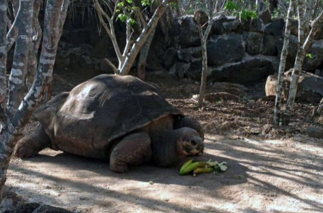 Una imagen de la tortuga 'Pepe, el misionero'.